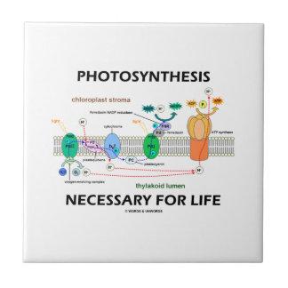 Photosynthèse nécessaire pour la vie dépendant de petit carreau carré