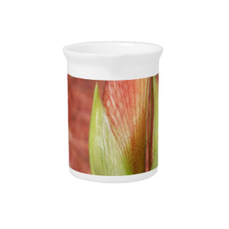 Pichet 102a l'amaryllis Apple fleurissent bourgeon