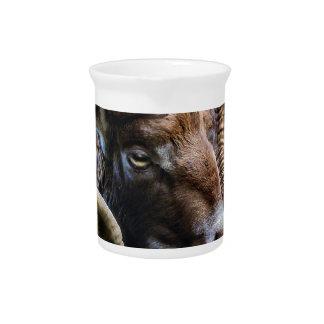 Pichet Animal mammifère Mouflon du monde animal de nature