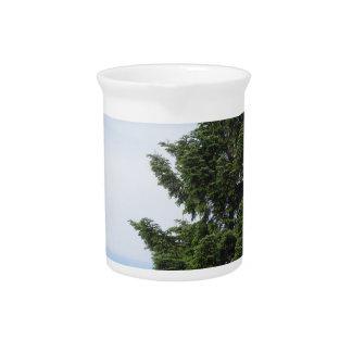 Pichet Arbre de sapin vert contre un ciel clair