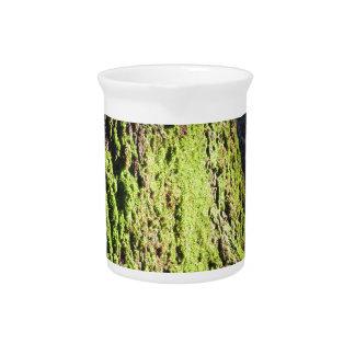 Pichet La mousse verte dans le détail de nature de la