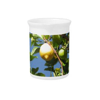 Pichet Le citron porte des fruits accrochant sur l'arbre