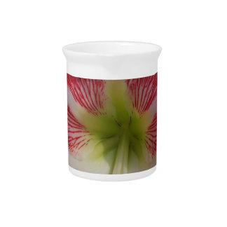 Pichet MegaStar2 rouge et blanc de l'amaryllis 106a