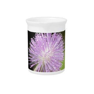 Pichet Plante sensible (pudica de mimosa)