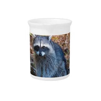 Pichet Raton laveur à l'état du parc WA de défi de point