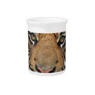 Pichet Tigre adulte