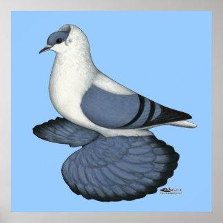 Pigeon bleu d'hirondelle posters