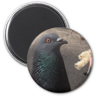 pigeon magnet rond 8 cm