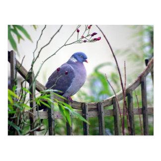 pigeon sur la carte de barrière cartes postales