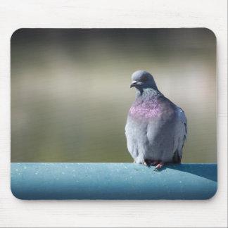 Pigeon Tapis De Souris