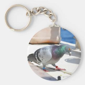 Pigeon voyageur sur un yacht porte-clé rond