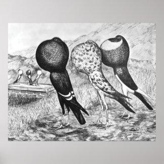 Pigeons de Pouter de Brunner Poster