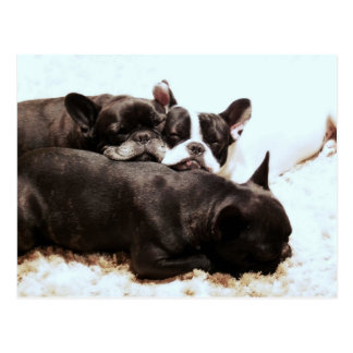 pile de bouledogue français de puppies.png cartes postales