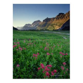 Pinceau indien au passage de Logan, glacier Cartes Postales