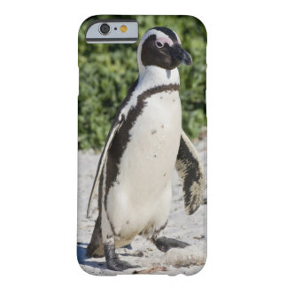 Pingouin africain, autrefois connu sous le nom coque iPhone 6 barely there