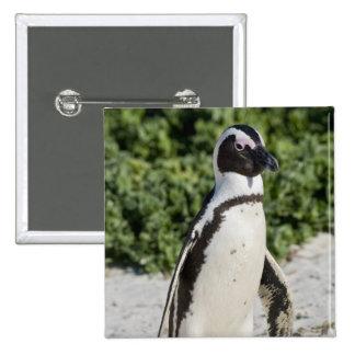 Pingouin africain, autrefois connu sous le nom d'â badge carré 5 cm