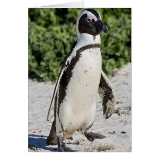 Pingouin africain, autrefois connu sous le nom d'â carte de vœux