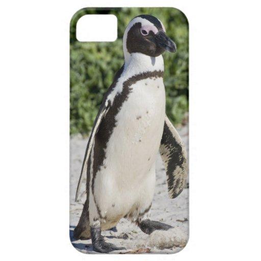Pingouin africain, autrefois connu sous le nom d'â étui iPhone 5