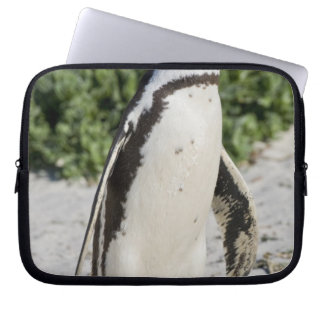 Pingouin africain, autrefois connu sous le nom d'â trousses pour ordinateur portable