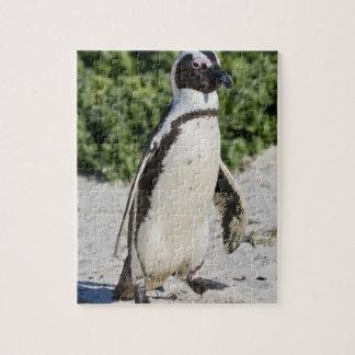 Pingouin africain, autrefois connu sous le nom d'â puzzles