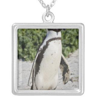 Pingouin africain, autrefois connu sous le nom pendentif carré