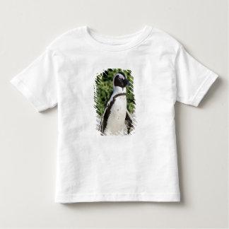 Pingouin africain, autrefois connu sous le nom t-shirt pour les tous petits