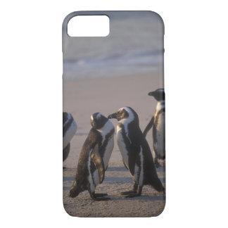 Pingouin africain (demersus de Spheniscus) ou âne Coque iPhone 7