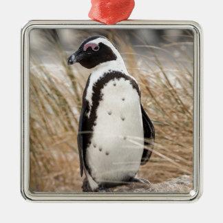 Pingouin africain sur la plage ornement carré argenté
