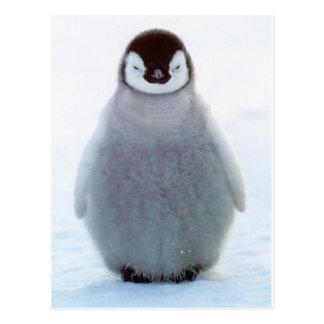 Pingouin de bébé carte postale
