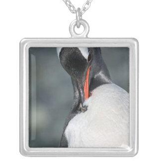 Pingouin de Gentoo dans le port Antarctique de Pendentif Carré