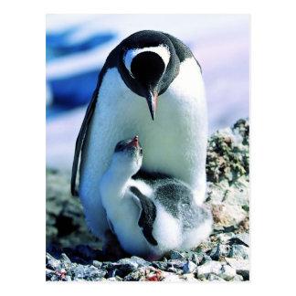 Pingouin de mère et de bébé carte postale