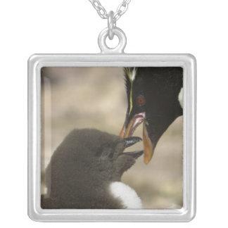 pingouin de Roche-trémie, chrysocome d'Eudyptes, Pendentif Carré