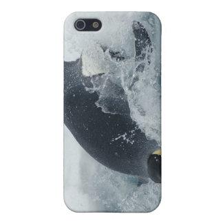 Pingouin d'empereur de plongée étuis iPhone 5