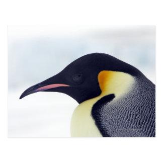 Pingouin d'empereur, île de colline de neige, mer carte postale