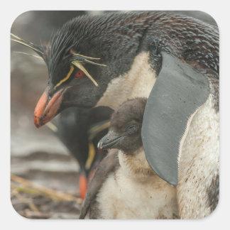 Pingouin et poussin de Rockhopper Sticker Carré
