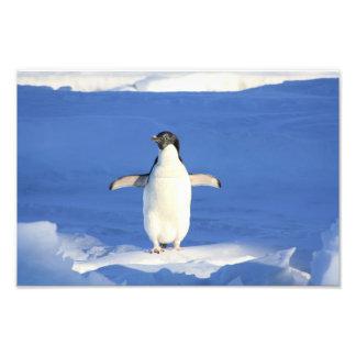 Pingouin mignon photo d'art