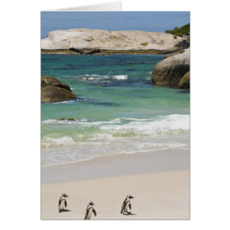 Pingouins à la plage de rochers, ville de Simons, Cartes