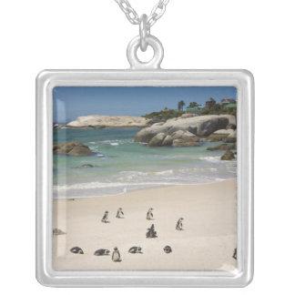 Pingouins à la plage de rochers, ville de Simons, Pendentif Carré