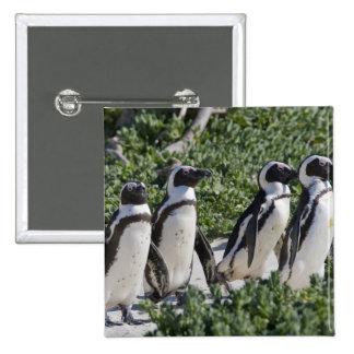 Pingouins africains, autrefois connus sous le nom  badge carré 5 cm