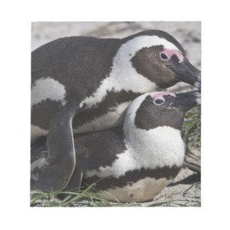 Pingouins africains, autrefois connus sous le nom  bloc mémo