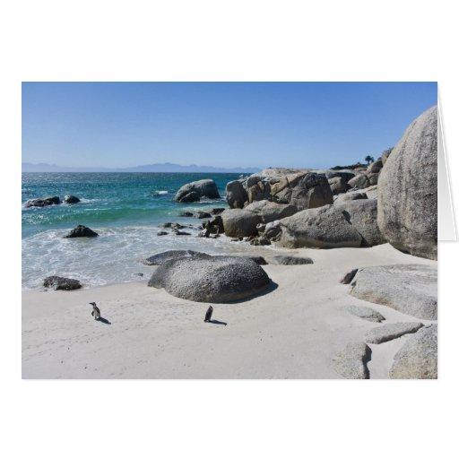 Pingouins africains, autrefois connus sous le nom  carte de vœux