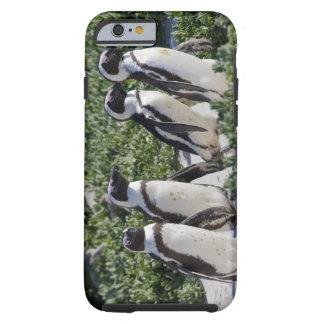 Pingouins africains, autrefois connus sous le nom coque iPhone 6 tough