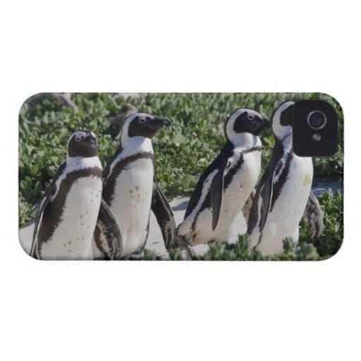 Pingouins africains, autrefois connus sous le nom  coques Case-Mate iPhone 4