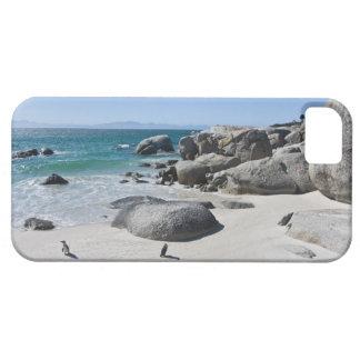 Pingouins africains, autrefois connus sous le nom coque Case-Mate iPhone 5