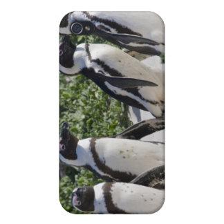 Pingouins africains, autrefois connus sous le nom  iPhone 4 case