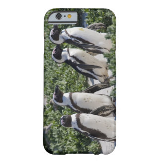Pingouins africains, autrefois connus sous le nom coque iPhone 6 barely there