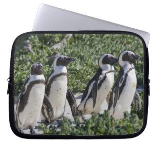Pingouins africains, autrefois connus sous le nom  housse ordinateur portable