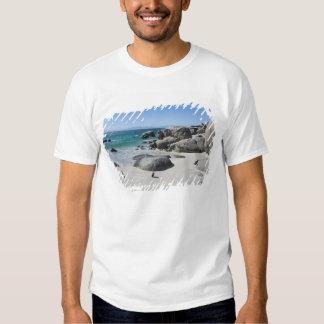 Pingouins africains, autrefois connus sous le nom t-shirt