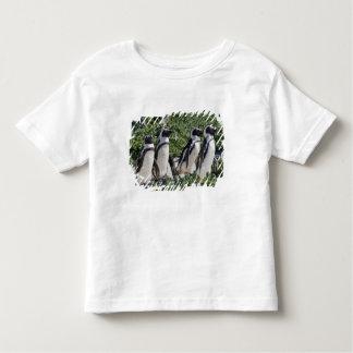 Pingouins africains, autrefois connus sous le nom t-shirt pour les tous petits