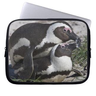 Pingouins africains, autrefois connus sous le nom  trousse pour ordinateur portable